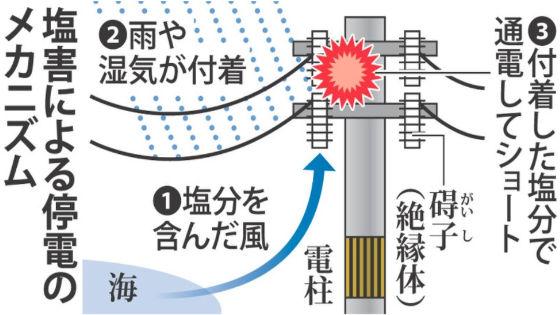 台風の塩害3