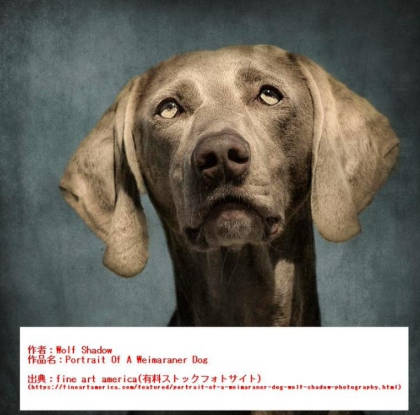 勝海麻衣の盗作疑惑の比較犬の原画